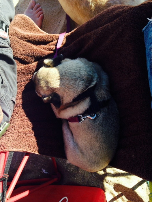 Puppy hammock