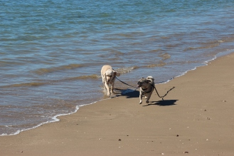 Puppies love the beach!