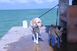 Pups enjoying a stroll along the pier... do I smell fishes??